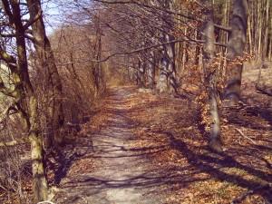 Herbstmomente, Foto Margarete Rosen