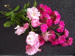 rosa Rosen Foto: Margarete Rosen