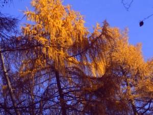 Herbstzeit Foto: Margarete Rosen