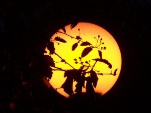 friedliche Walpurgisnacht