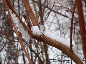 Schnee-Impression